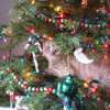 cat-in-a-christmas-tree