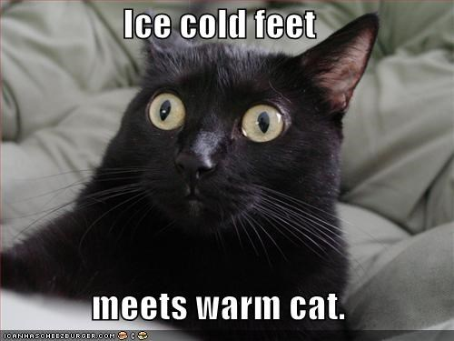Warm Cat on Cold Feet That's the only technology I need today.